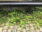 Schöne Orte - Gent - Human Lifestyle Blog - Andrea Ege Photography